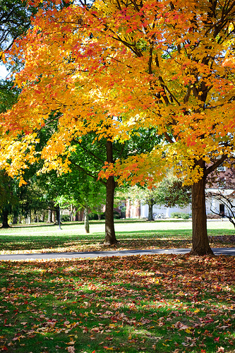 campus photo of trees in the fall